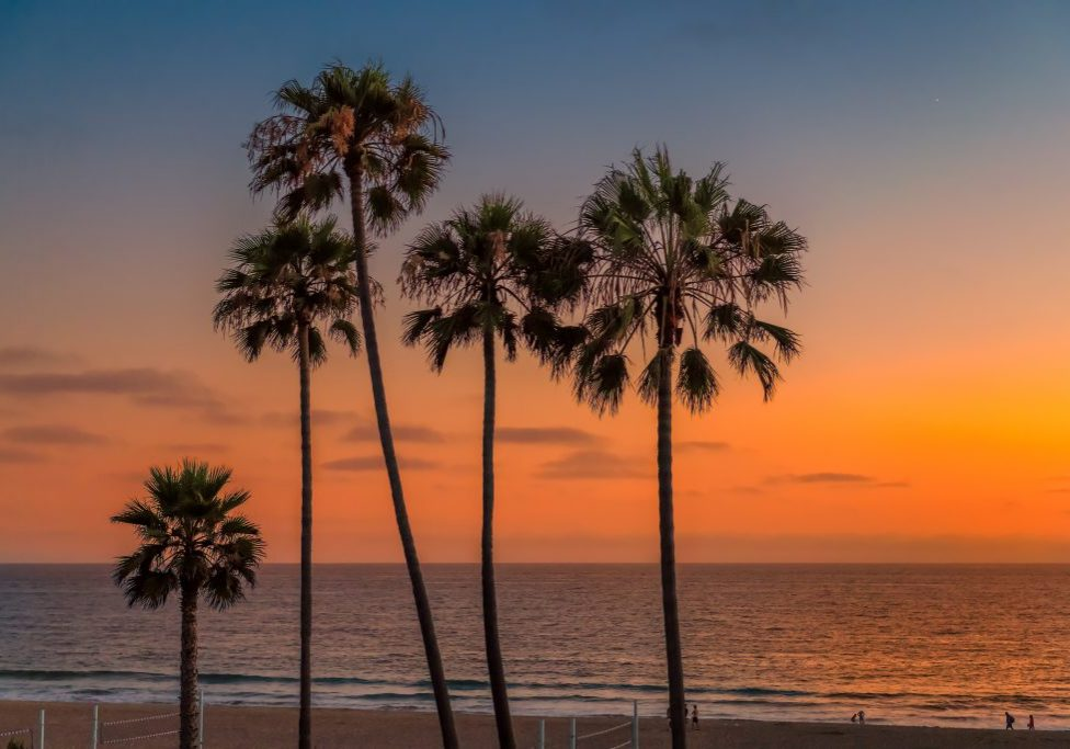 bigstock-California-Beach-Palm-Trees-A-269895232